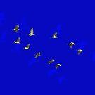 White Ibis In Flight by miroslava