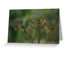 Migration Greeting Card