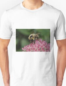 Bee Feeding on Sedum Unisex T-Shirt