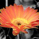 Firey Flower by Lorin Richter
