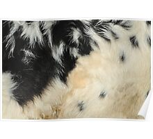 Cowhide Poster