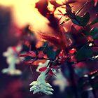 Square beauties. by Beata  Czyzowska Young
