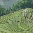 Rice terraces at Meng Ping by jmccabephoto