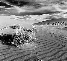 Dunes 2 by JimGuy