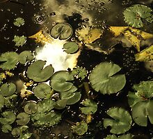 Leaves and Lily Pads by Richard Buchanan II