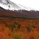 Mountains and forest outside Ushuaia by jmccabephoto