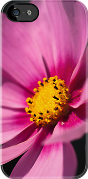 Cosmea iPhone Case by Karen Havenaar