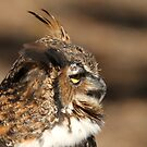 Great Horned Owl by Gregg Williams