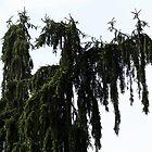 Tree Monster by Deborah Crew-Johnson
