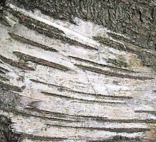 Stripey birch bark by KatDoodling