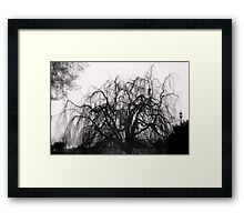 Wickedly Beautiful Framed Print