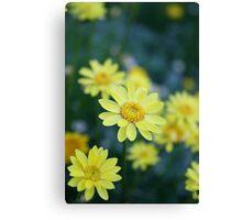 Yellow Spring Daisies Canvas Print