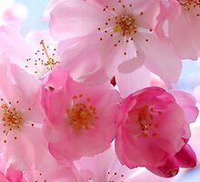 ~ Cherry Blossom ~ by Alexandra  Lexx