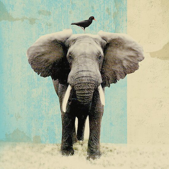 friends for life _ elephant and a black bird by vinpez