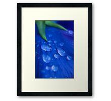 Raindrop Pansy Framed Print