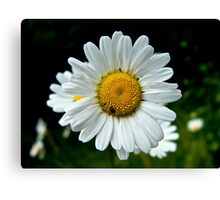 Spring flower and insect Canvas Print