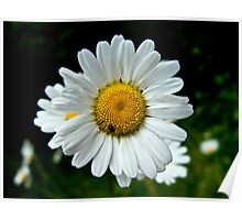 Spring flower and insect Poster