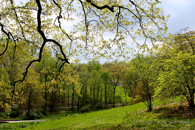 Blooming Landscape by Deborah Crew-Johnson