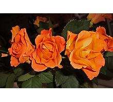 Roses for real friends Photographic Print