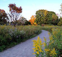 The Fall Path by Brian Gaynor
