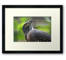 Did I See Some Prey? Framed Print
