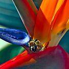 Working Wasps by Heather Friedman