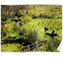 Sunning Wild Turkeys......... Happy Thanksgiving Poster