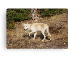 My First Timber Wolf2 Canvas Print