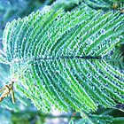 Raindrops on Fern, Canon IXUS 50 by cschurch