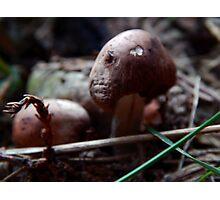Mushroom Kingdom Photographic Print