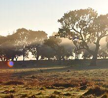 Kangaroos and Ponies in the Morning Mist by fenwickstud