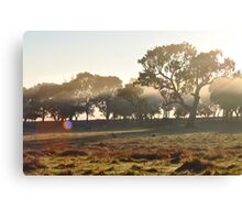 Kangaroos and Ponies in the Morning Mist Canvas Print