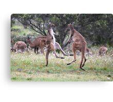 Kangaroos tail standing Canvas Print