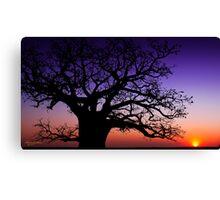 Boab Sunset Canvas Print