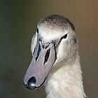 My Handsome Beak by Ladymoose