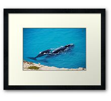 Southern Right Whale and calf Framed Print