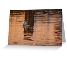 Common Gull Greeting Card