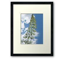 Here We Go Lupin Lou, Here We Go Lupin Li Framed Print