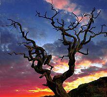 Lone Tree Sunset Case by David Alexander Elder