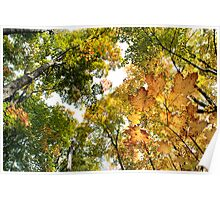 Fall Colours - Sharbot Lake Ontario Poster