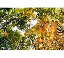 Fall Colours - Sharbot Lake Ontario Photographic Print