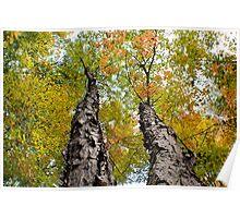 Split Tree - Sharbot Lake Ontario Poster