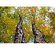 Split Tree - Sharbot Lake Ontario Photographic Print