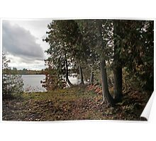 Cedars by the Lake - Sharbot Lake Ontario Poster