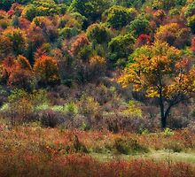 Colors of Autumn by Jane Best
