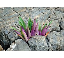 Volcanic Leaves  Photographic Print