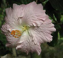 Flower #1 by PeterABanham