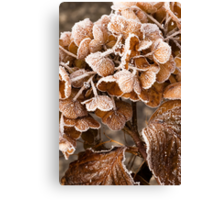 Frosted Hydrangea Canvas Print