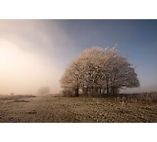 Misty Morn Photographic Print