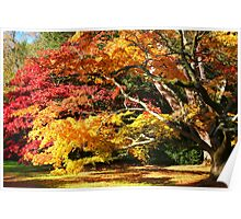 Autumn Acer Glade Poster